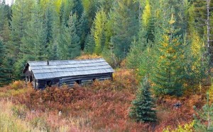 """Cabin in forest"""