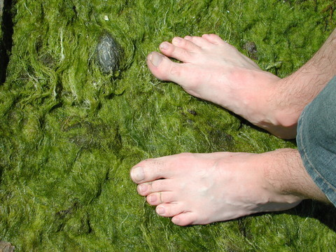photograph of bare feet