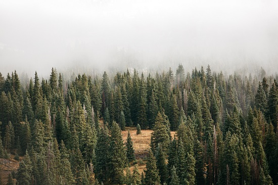 mountain forest with fog cover obscuring top half of photo